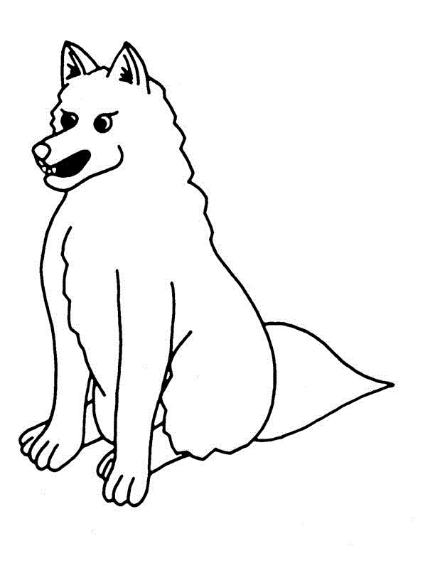 already colored Free Printable Coyote Coloring Pages For Kids free