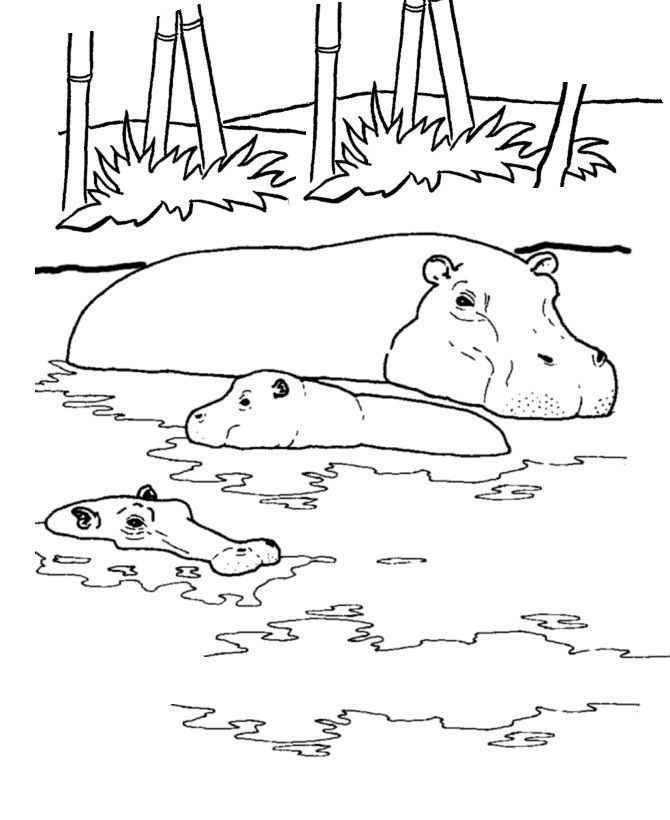 online Free Printable Hippo Coloring Pages For Kids simple
