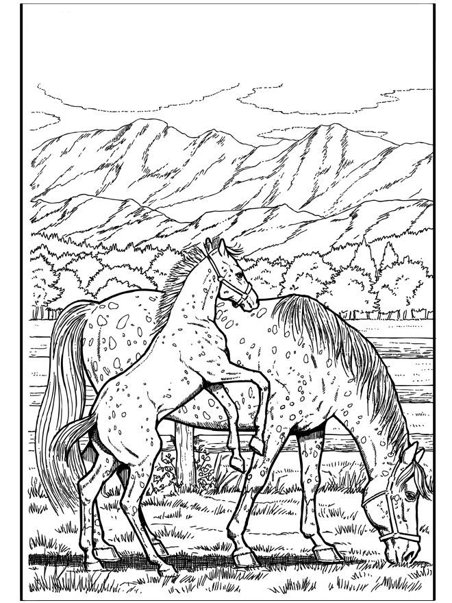Printable Horse Coloring Pages For Adults Best Coloring