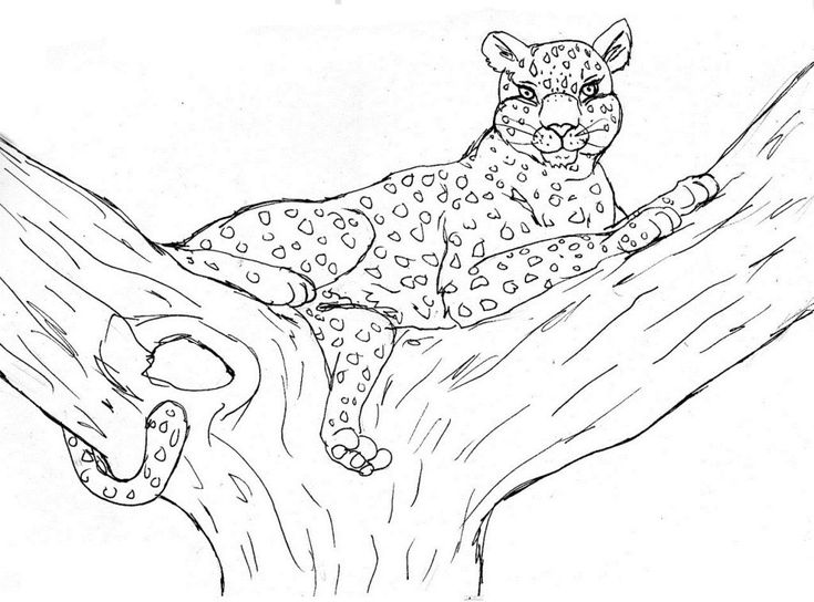 online Free Printable Cheetah Coloring Pages For Kids printable
