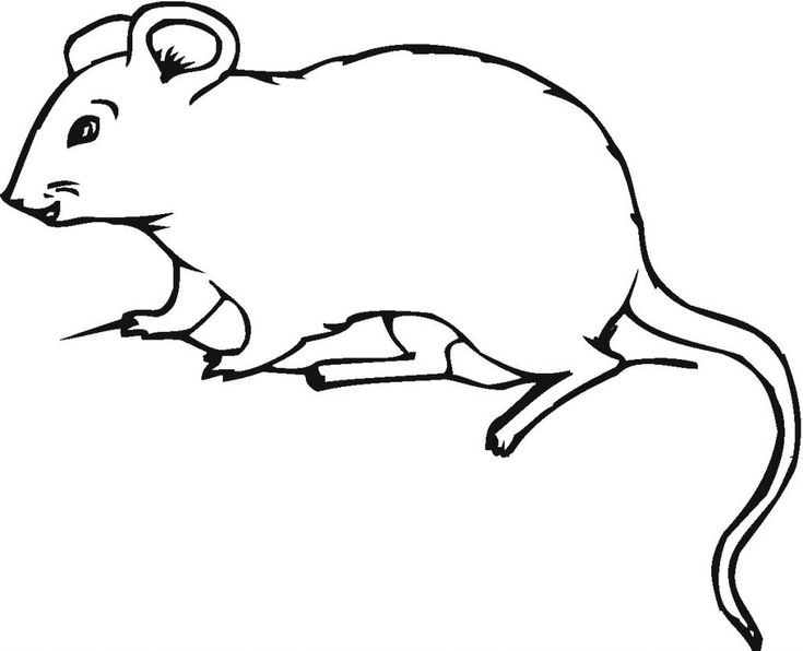 free Free Printable Mouse Coloring Pages For Kids free printable