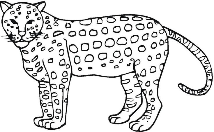 toddler Free Printable Cheetah Coloring Pages For Kids toddler