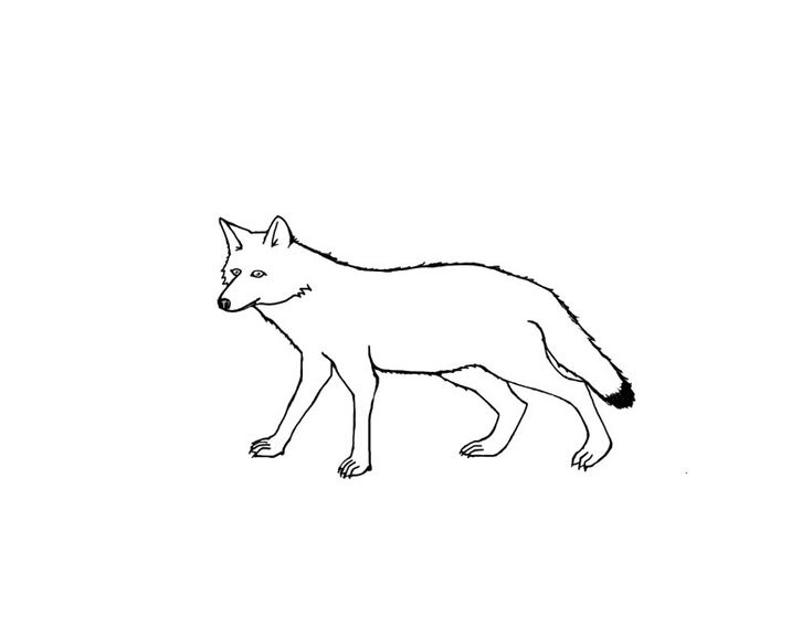for boys Free Printable Coyote Coloring Pages For Kids for girls
