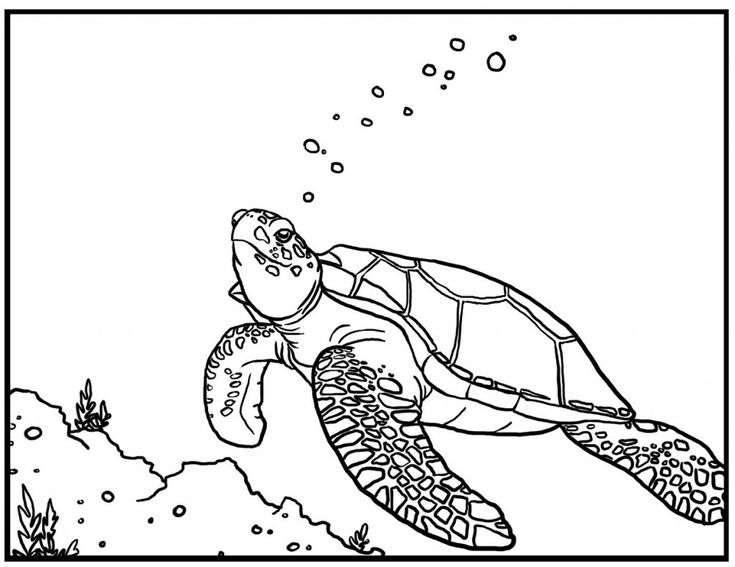 online Free Printable Sea Turtle Coloring Pages For Kids for sunday school