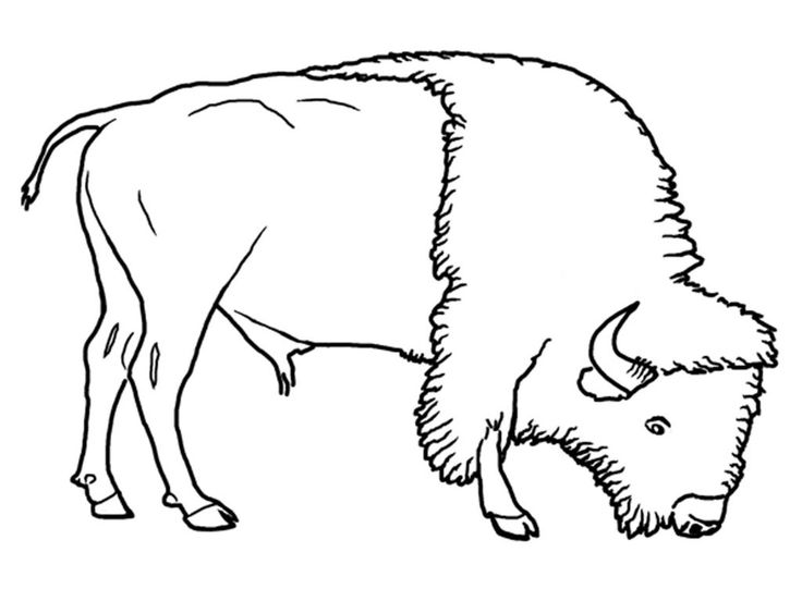for sunday school Free Printable Bison Coloring Pages For Kids for toddlers