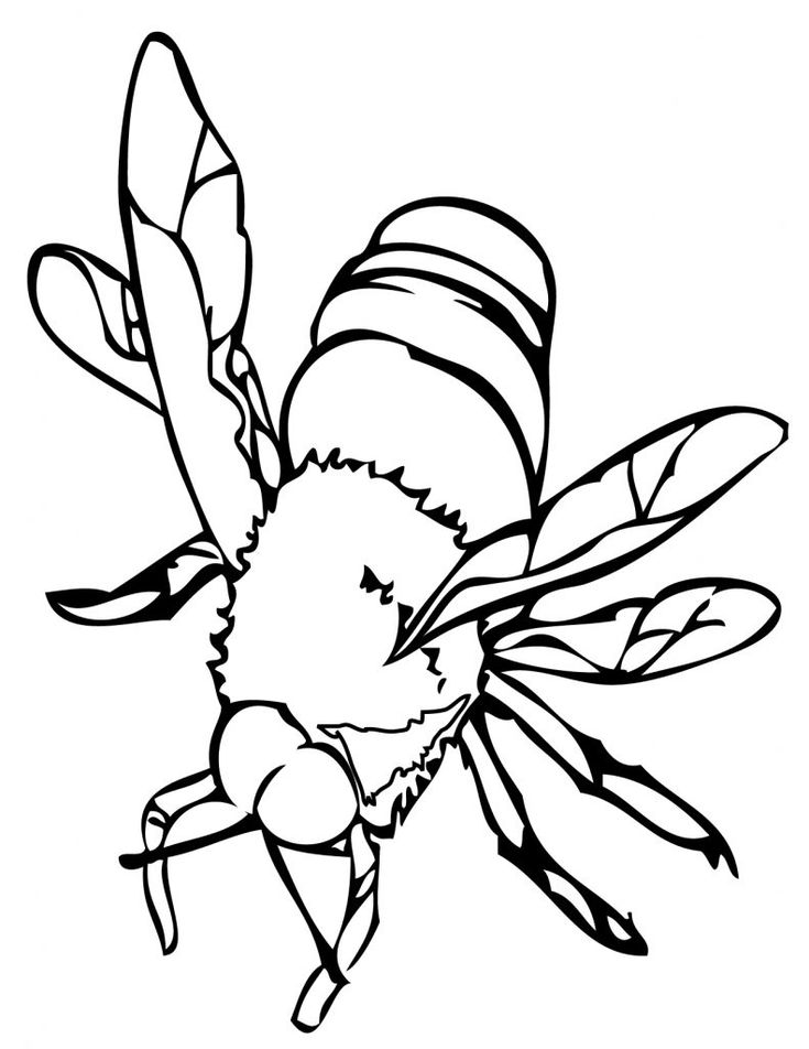 for kids Free Printable Bee Coloring Pages For Kids for kids