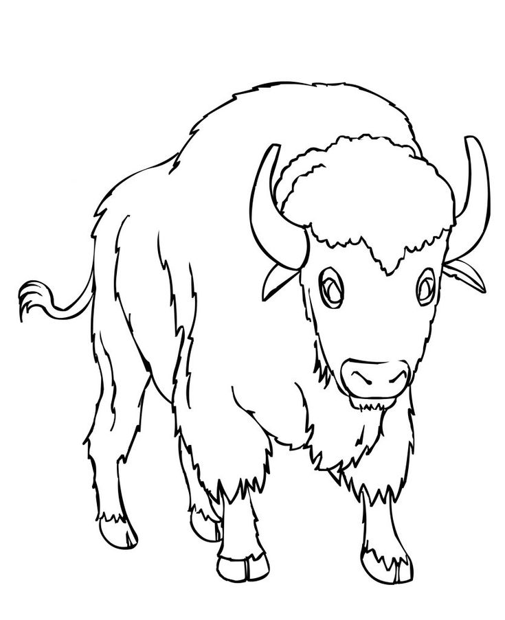 simple Free Printable Bison Coloring Pages For Kids preschool