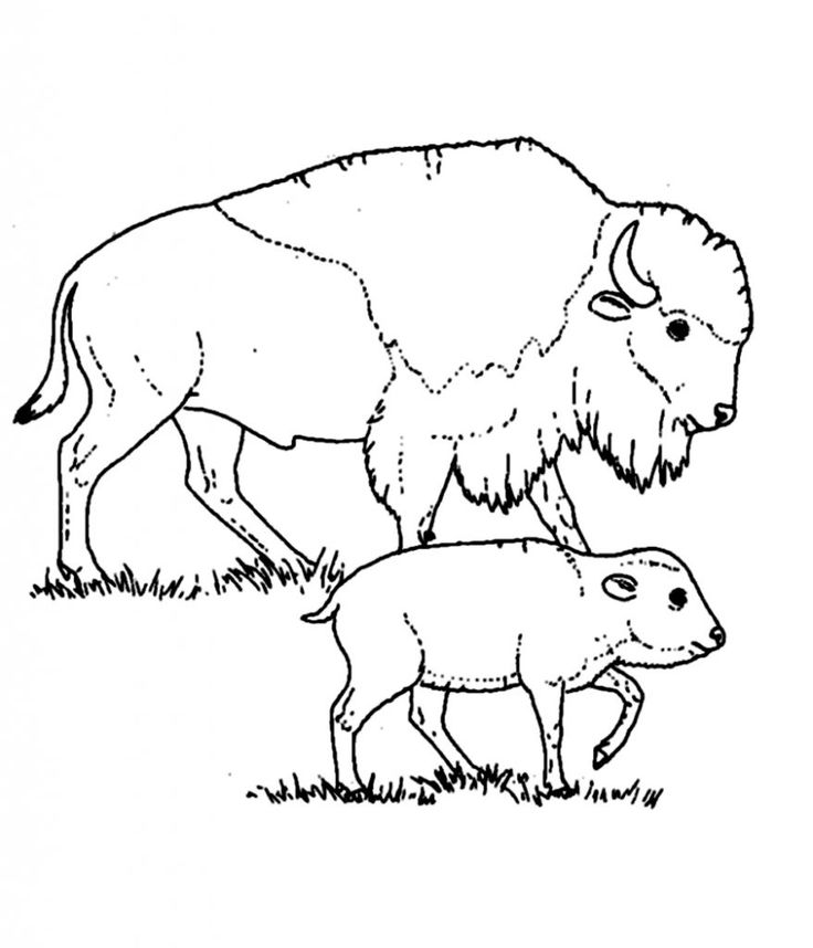 online Free Printable Bison Coloring Pages For Kids preschool