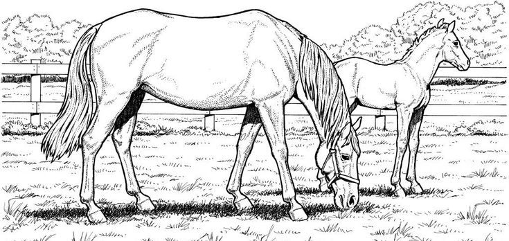 free printable Horse Coloring Pages for Adults - Best Coloring Pages For Ki... for girls