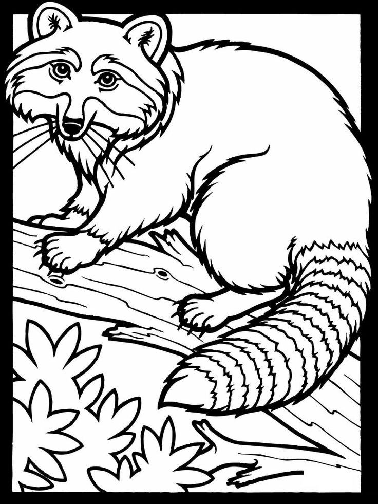 for teens Free Printable Raccoon Coloring Pages For Kids free printable