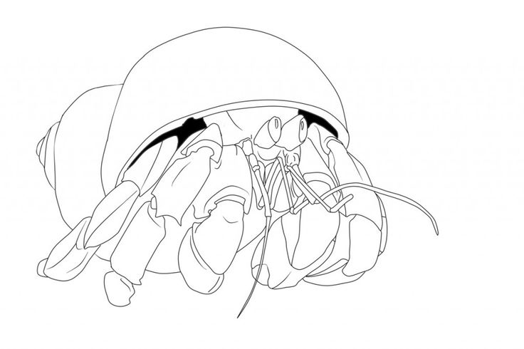 easy Free Printable Hermit Crab Coloring Pages For Kids preschool