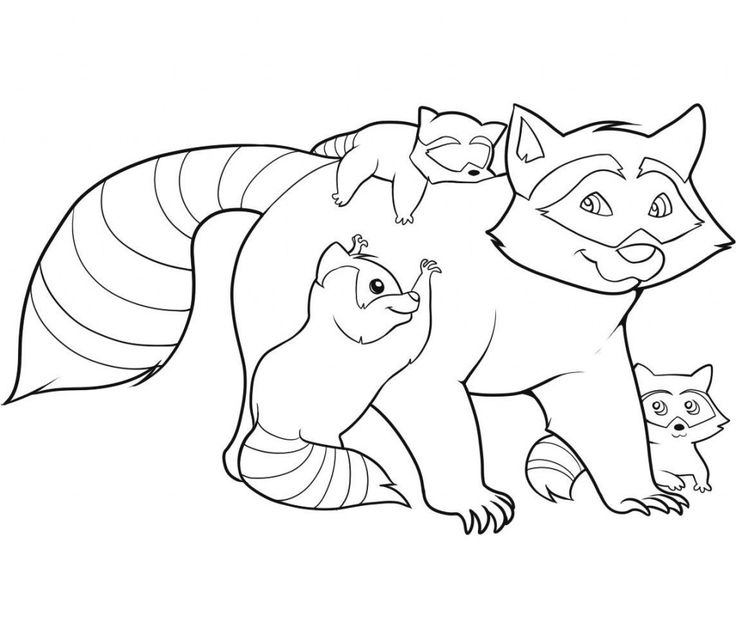 online Free Printable Raccoon Coloring Pages For Kids for kids