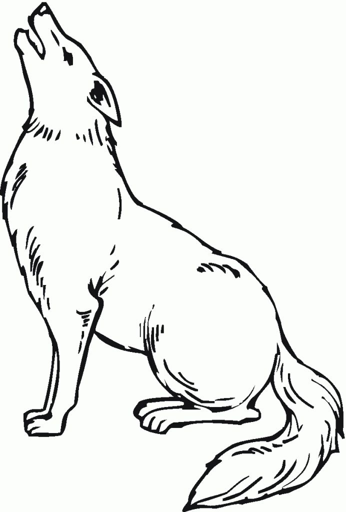 for kids Free Printable Coyote Coloring Pages For Kids to print out