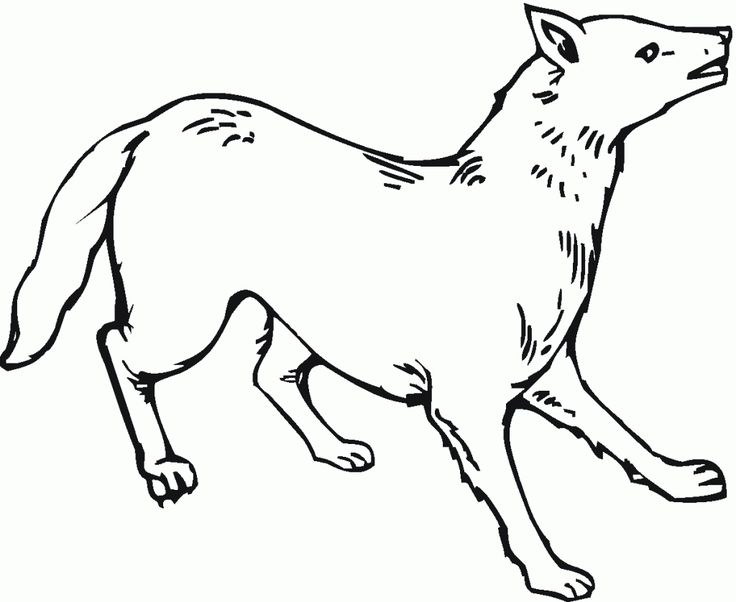to print out Free Printable Coyote Coloring Pages For Kids pdf