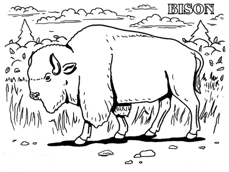 for teens Free Printable Bison Coloring Pages For Kids for kids