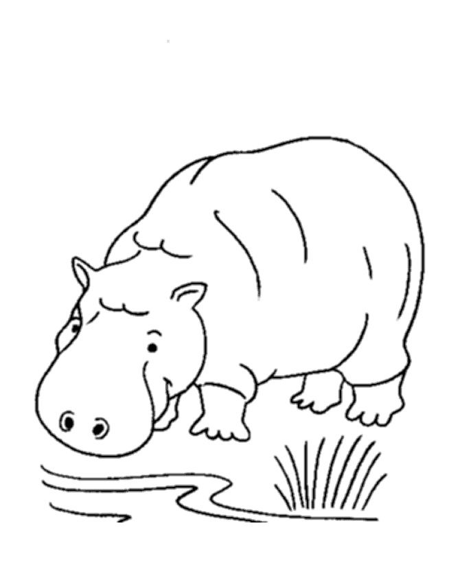 for kindergarten Free Printable Hippo Coloring Pages For Kids preschool