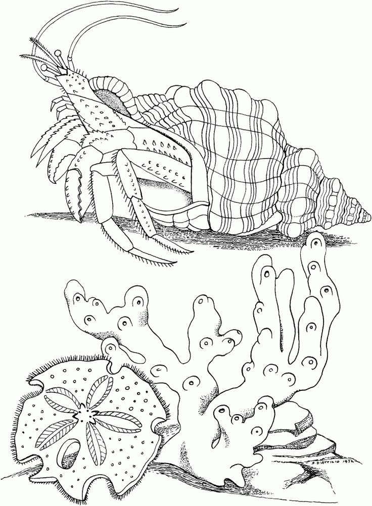 for girls Free Printable Hermit Crab Coloring Pages For Kids for adults