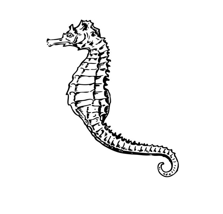 free printable Free Printable Seahorse Coloring Pages For Kids free