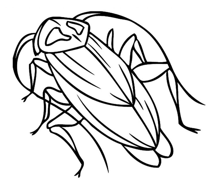 simple Free Printable Cockroach Coloring Pages For Kids for adults