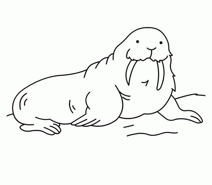 preschool Free Printable Walrus Coloring Pages For Kids for sunday school
