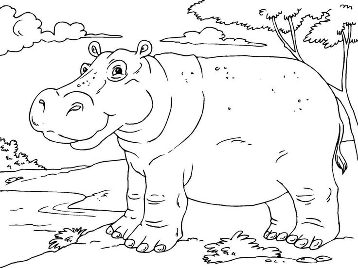 for kids Free Printable Hippo Coloring Pages For Kids simple