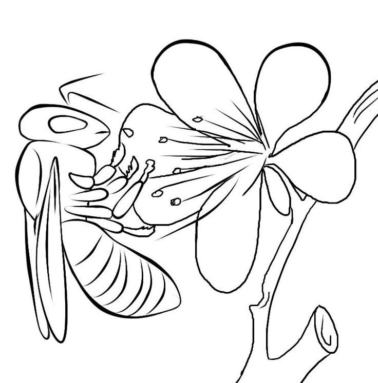 for kindergarten Free Printable Bee Coloring Pages For Kids to print out