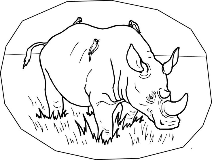 simple Free Printable Rhinoceros Coloring Pages For Kids for girls