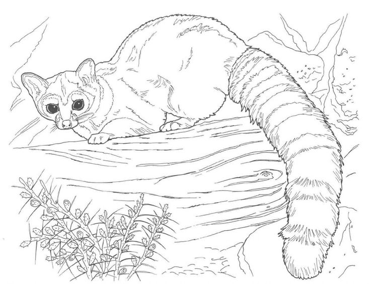 printable Free Printable Raccoon Coloring Pages For Kids for boys