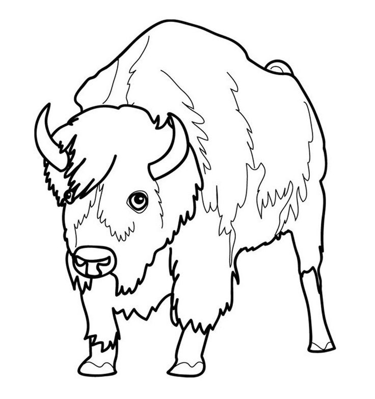free printable Free Printable Bison Coloring Pages For Kids for adults
