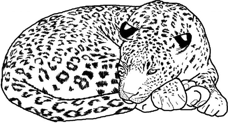 to print out Free Printable Cheetah Coloring Pages For Kids simple