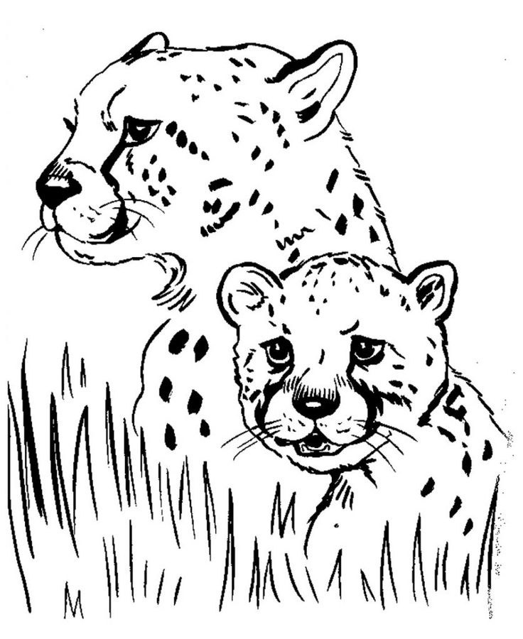 for teens Free Printable Cheetah Coloring Pages For Kids simple