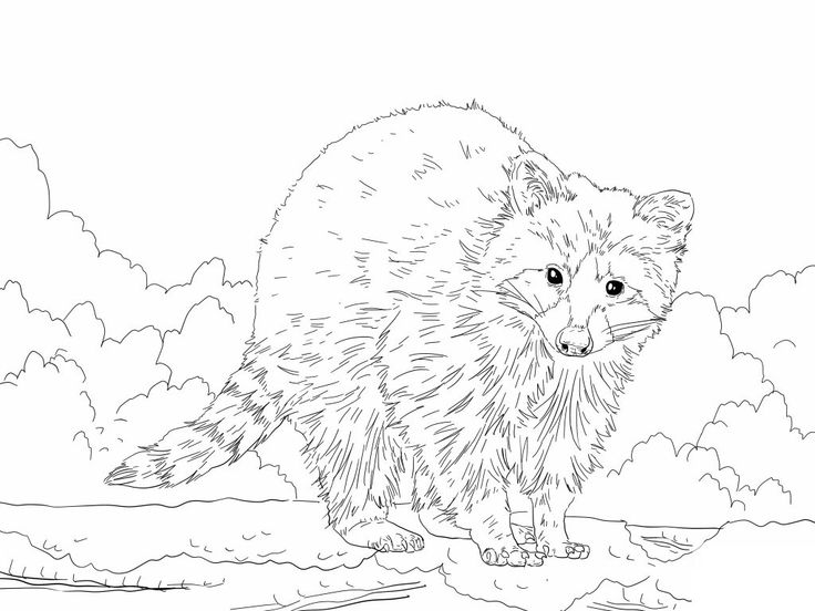 for toddlers Free Printable Raccoon Coloring Pages For Kids easy