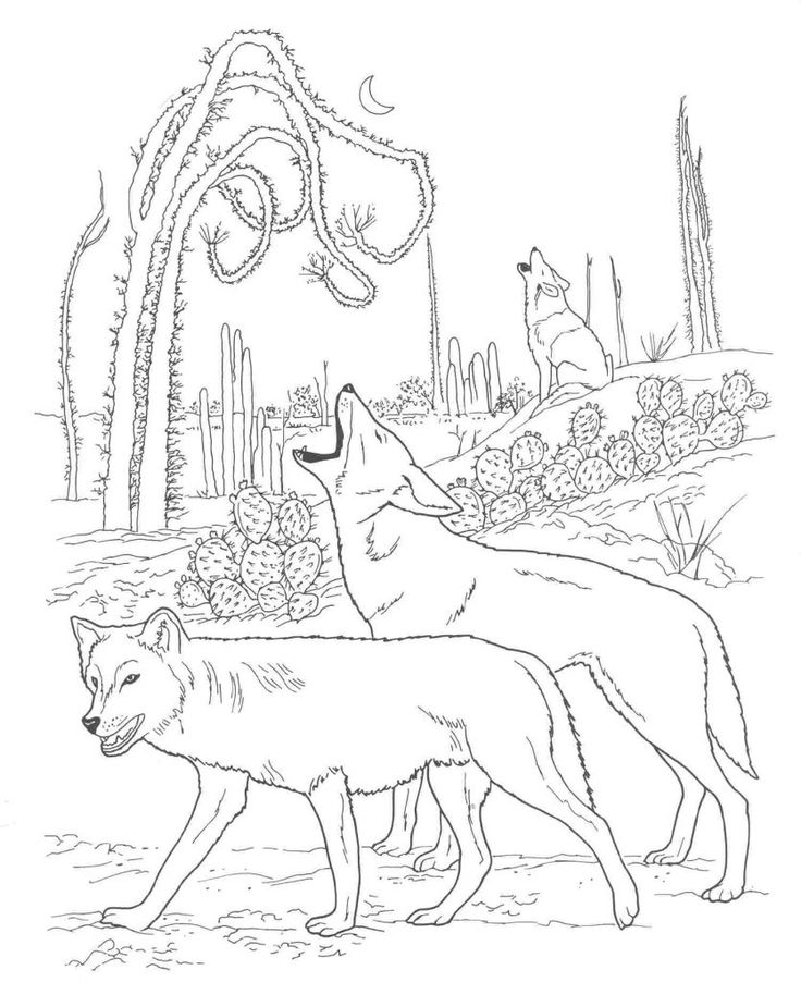 for toddlers Desert Coloring Pages - Best Coloring Pages For Kids for girls