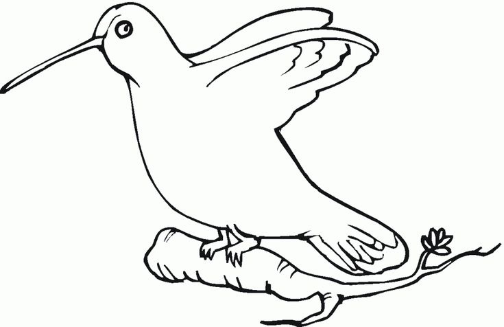for sunday school Free Printable Hummingbird Coloring Pages For Kids toddler