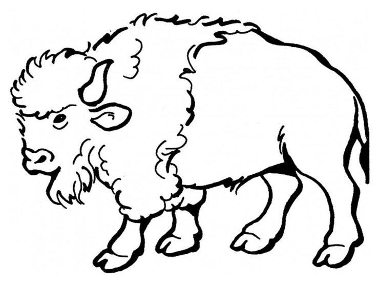 for boys Free Printable Bison Coloring Pages For Kids to print out