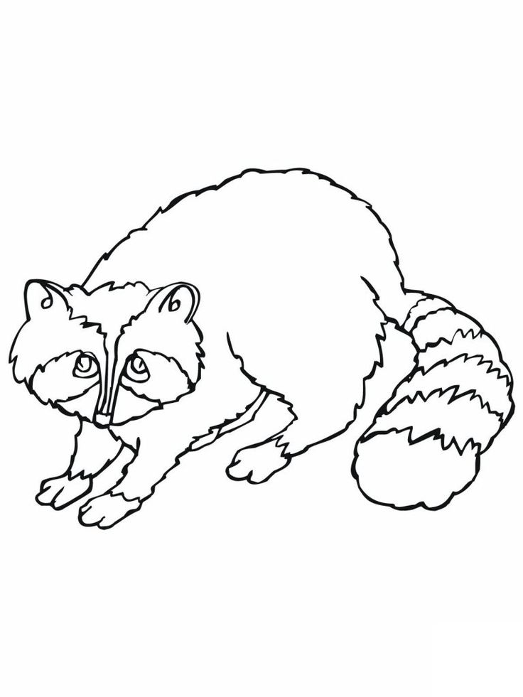 preschool Free Printable Raccoon Coloring Pages For Kids for girls