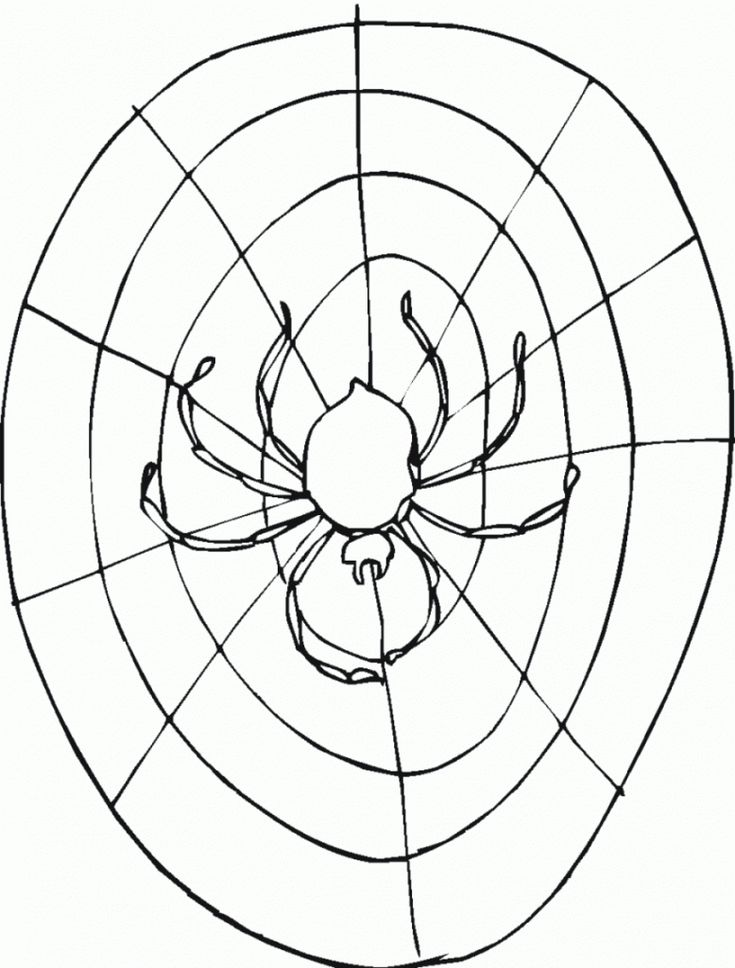preschool Free Printable Spider Web Coloring Pages For Kids simple
