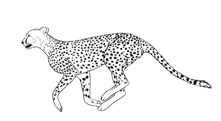 to print out Free Printable Cheetah Coloring Pages For Kids easy