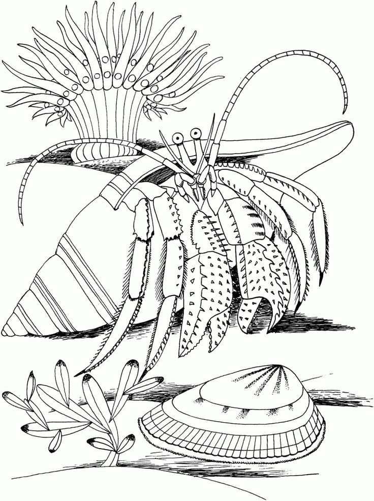 toddler Free Printable Hermit Crab Coloring Pages For Kids for kids
