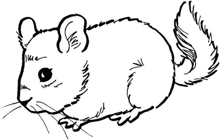 for adults Free Printable Mouse Coloring Pages For Kids easy