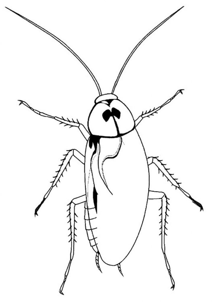 for teens Free Printable Cockroach Coloring Pages For Kids pdf