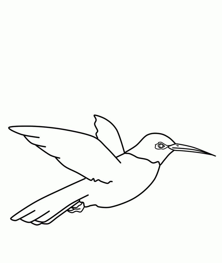 to print out Free Printable Hummingbird Coloring Pages For ...