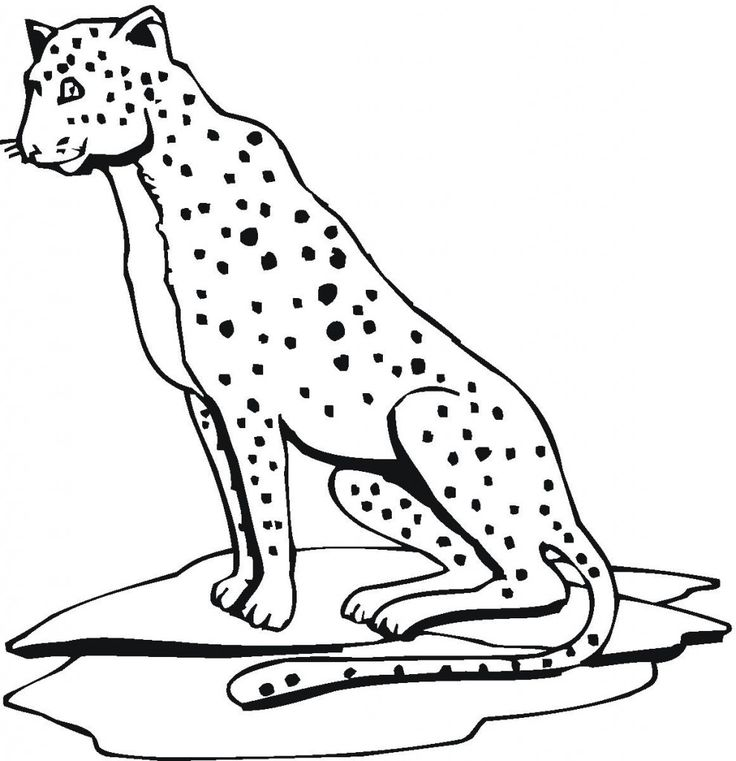 for adults Free Printable Cheetah Coloring Pages For Kids printable