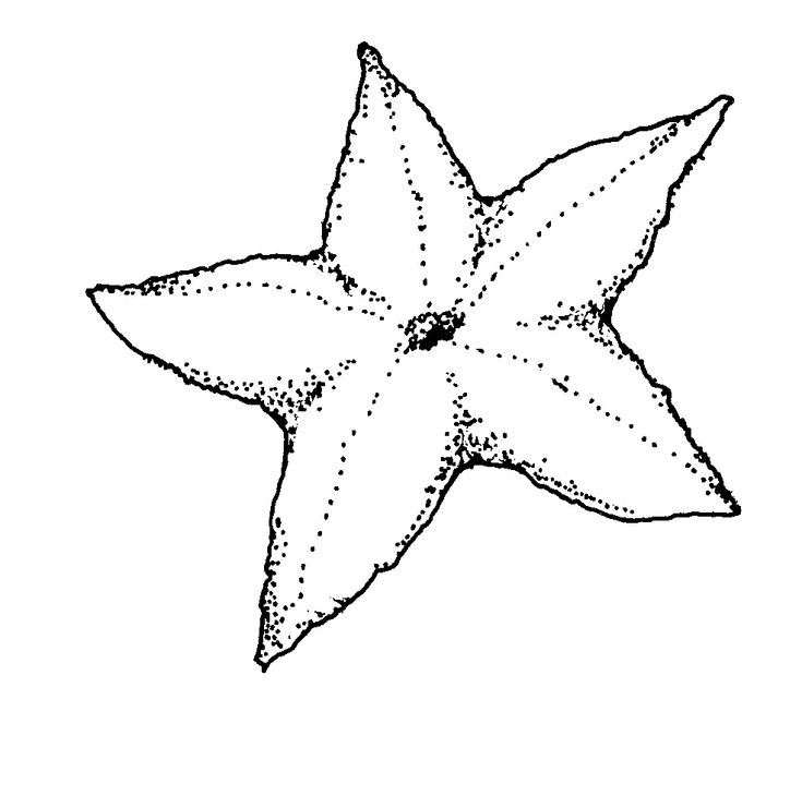 easy Free Printable Starfish Coloring Pages For Kids toddler