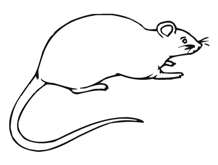 already colored Free Printable Rat Coloring Pages For Kids easy