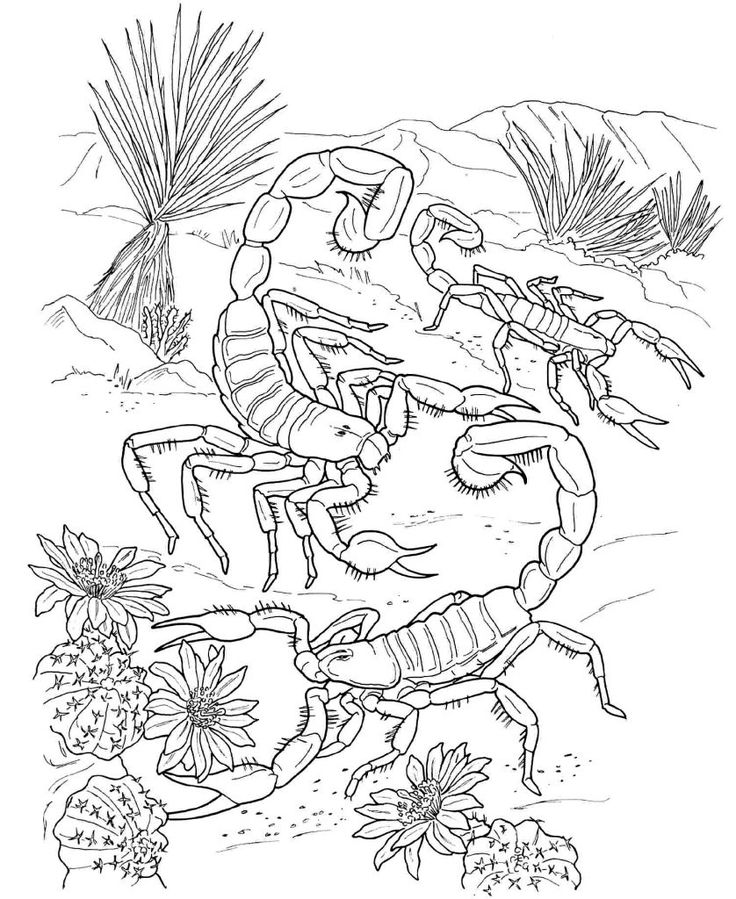 to print out Free Printable Scorpion Coloring Pages For Kids already colored