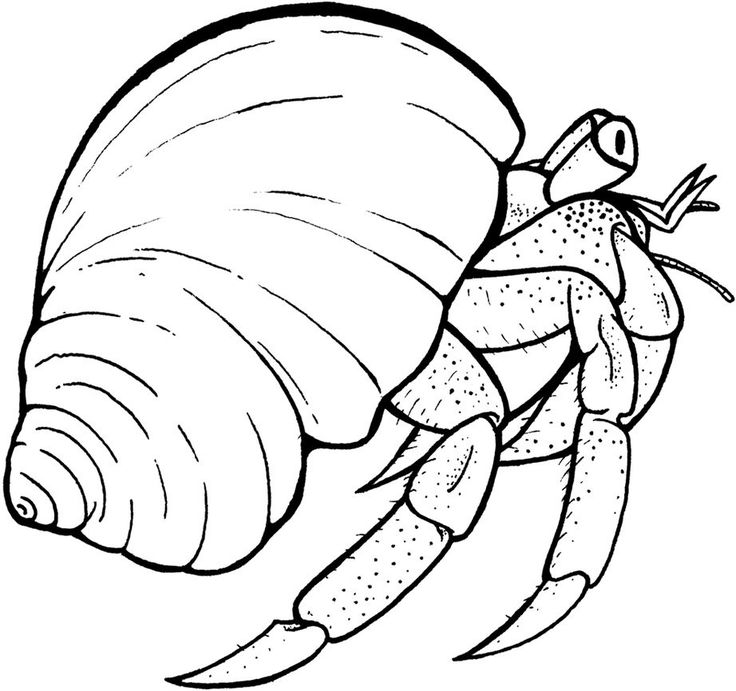 online Free Printable Hermit Crab Coloring Pages For Kids free printable
