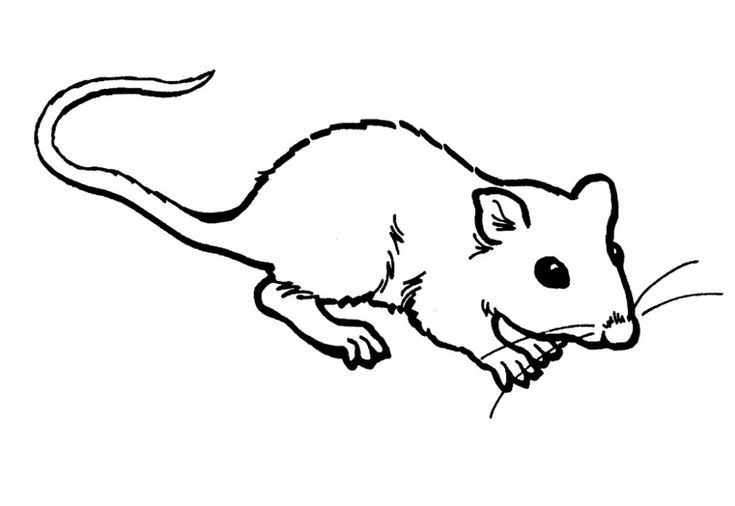 for girls Free Printable Rat Coloring Pages For Kids preschool