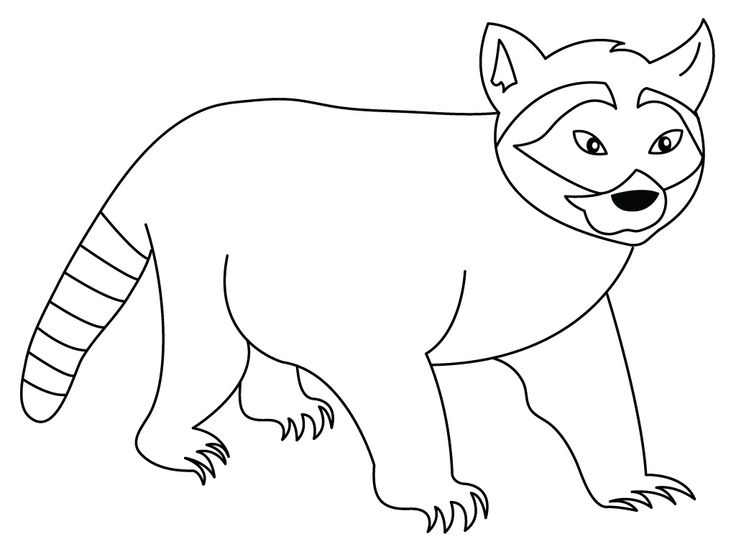 for girls Free Printable Raccoon Coloring Pages For Kids already colored