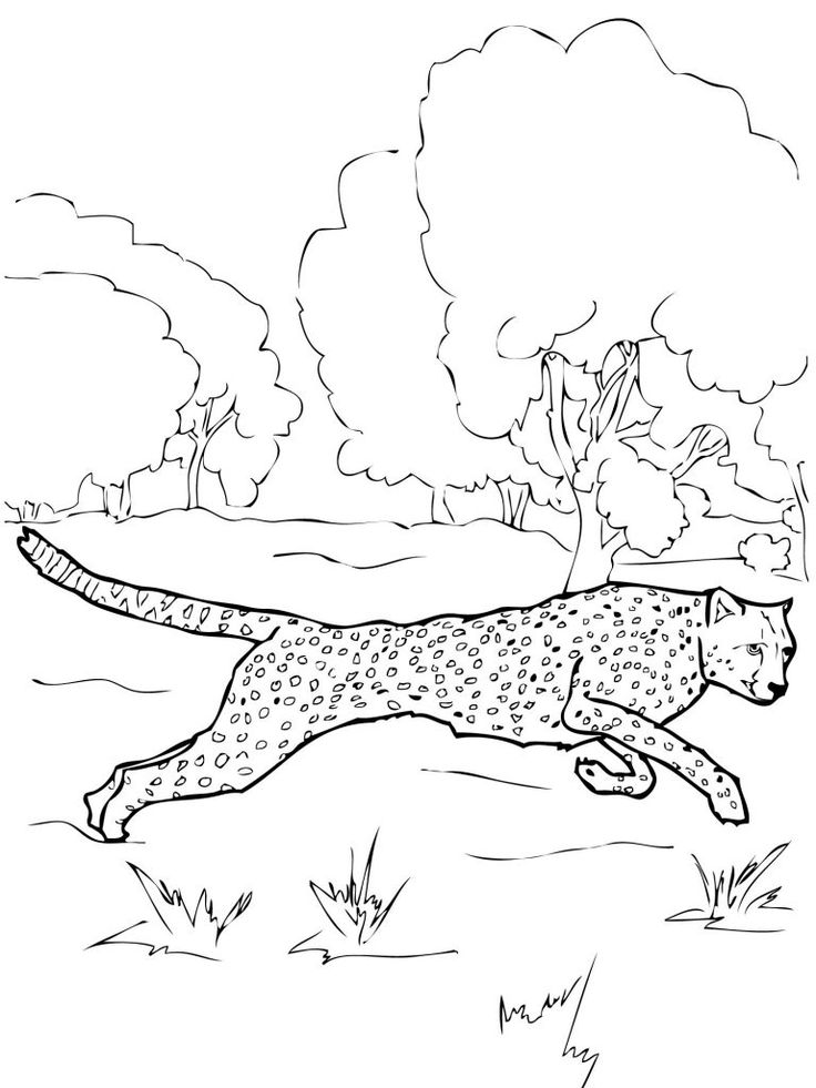 for adults Free Printable Cheetah Coloring Pages For Kids simple